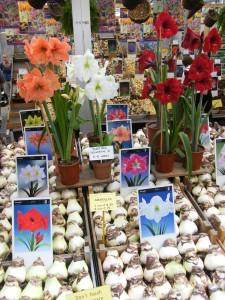 Peu de tulipes au marché aux fleurs