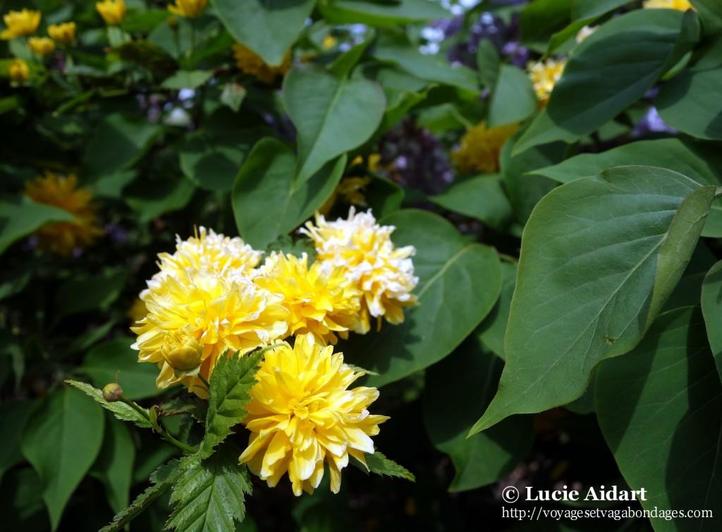 Fleurs wimbledon