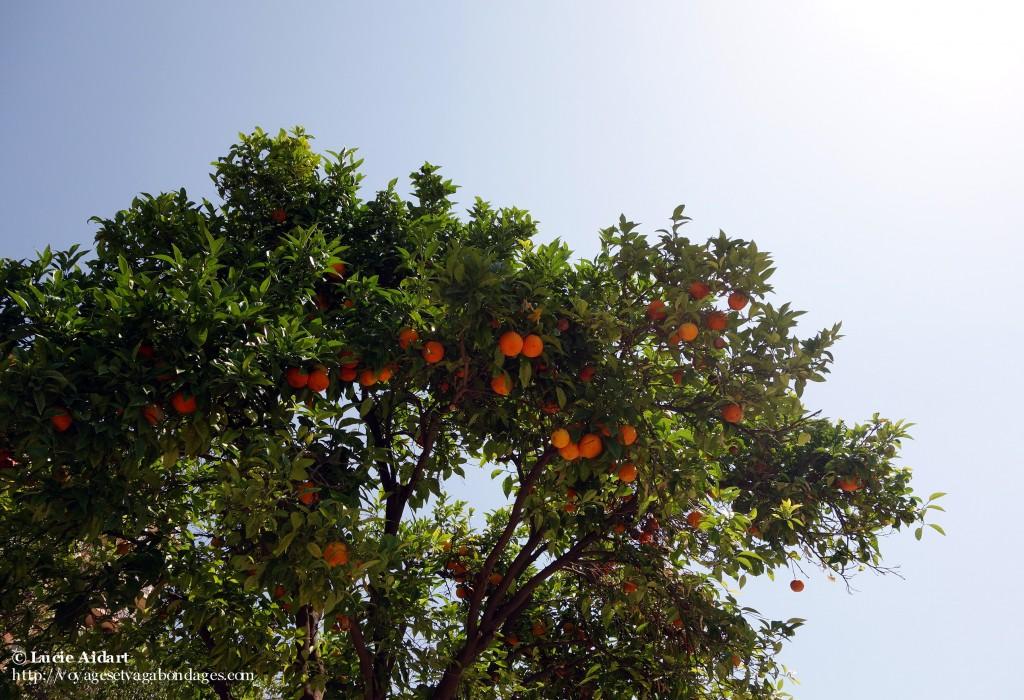 Oranges de Valence