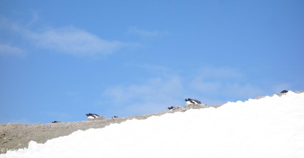 Rencontre avec les manchots en Antarctique