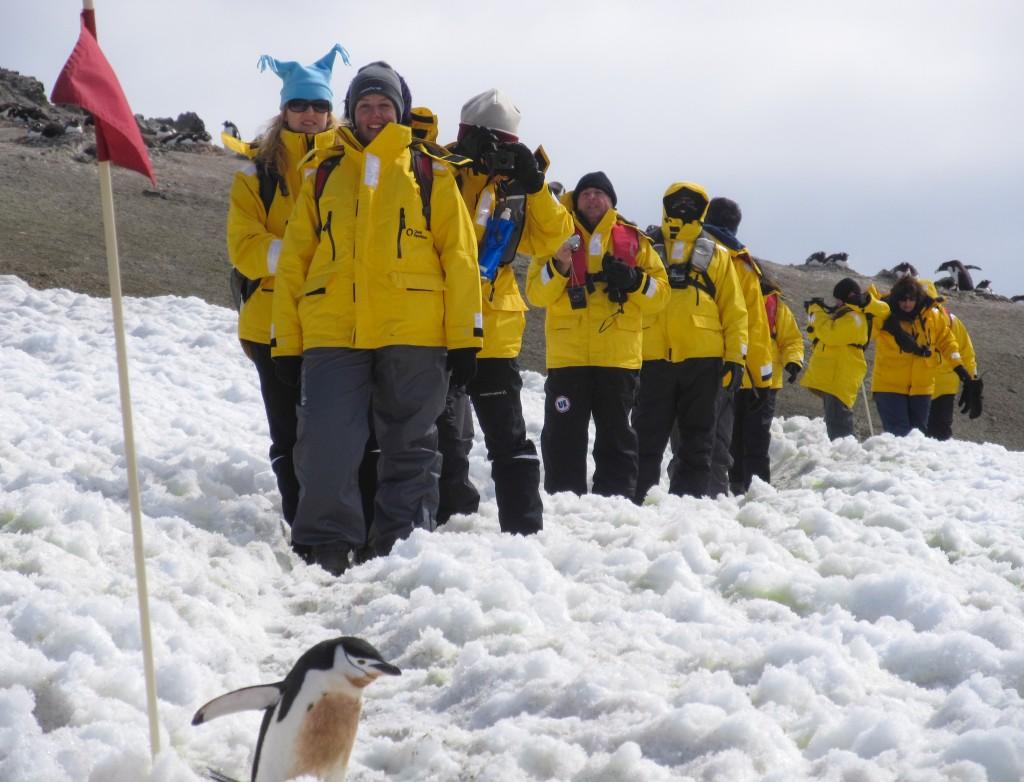 Priorité aux manchots en Antarctique