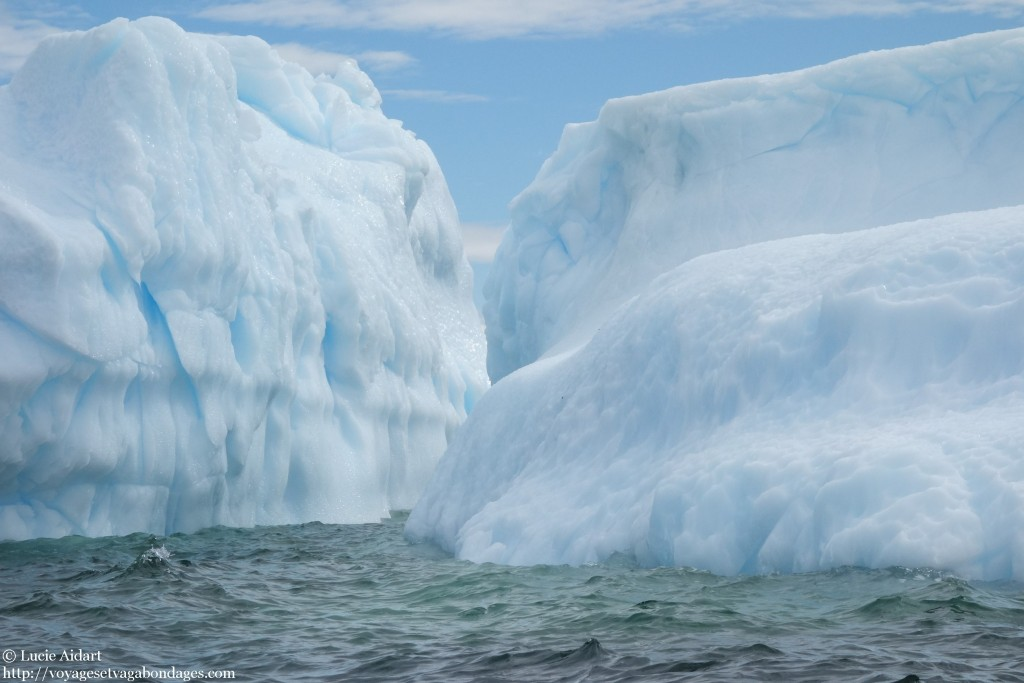 Le ballet des icebergs