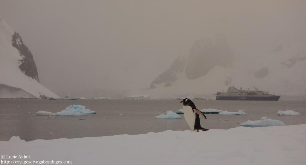 Manchot au réveil lors d'une nuit de camping en Antarctique à la belle étoile