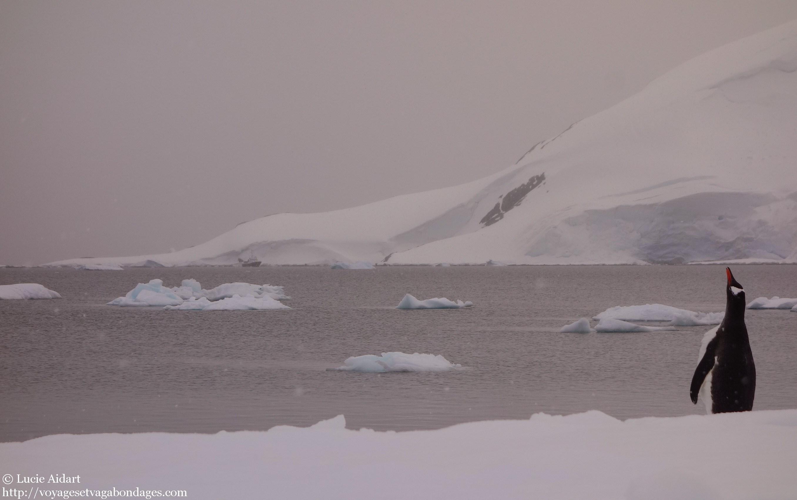 Voyage en antarctique dormir la belle toile - J ai bien dormi ...