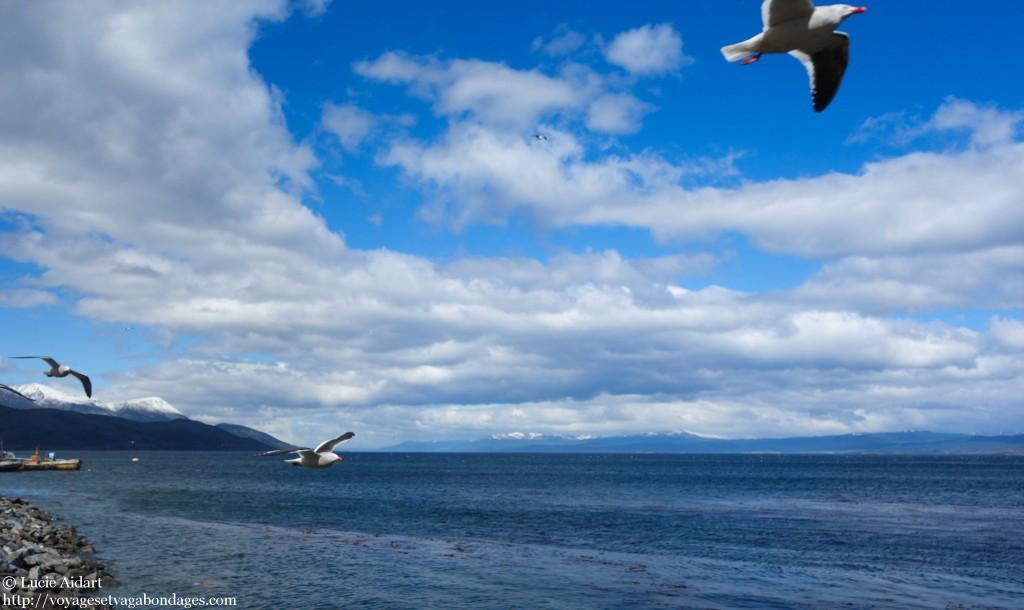 Canal Beagle à Ushuaïa - Que faire et que visiter à Ushuaia en Patagonie Argentine