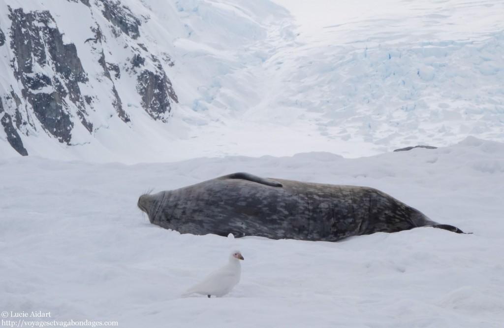 La saucisse phoque - Danco Island - Fêter Noël en Antarctique - Une ambiance de fin du monde