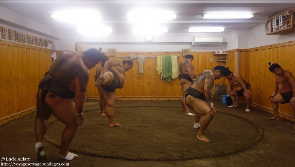 Entraînement de sumo