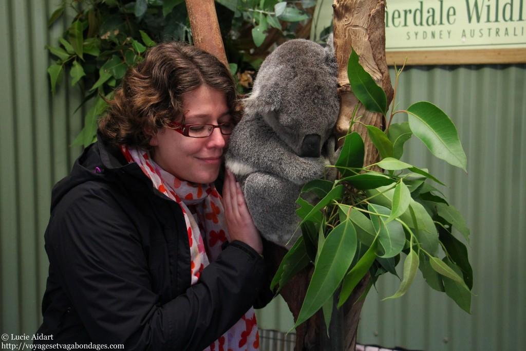 Juin 2013 - A la rencontre de koalas