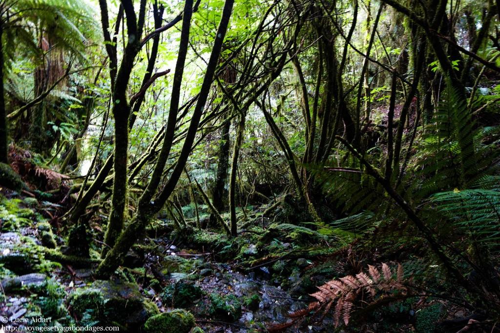 Randonnée dans la forêt tropicale