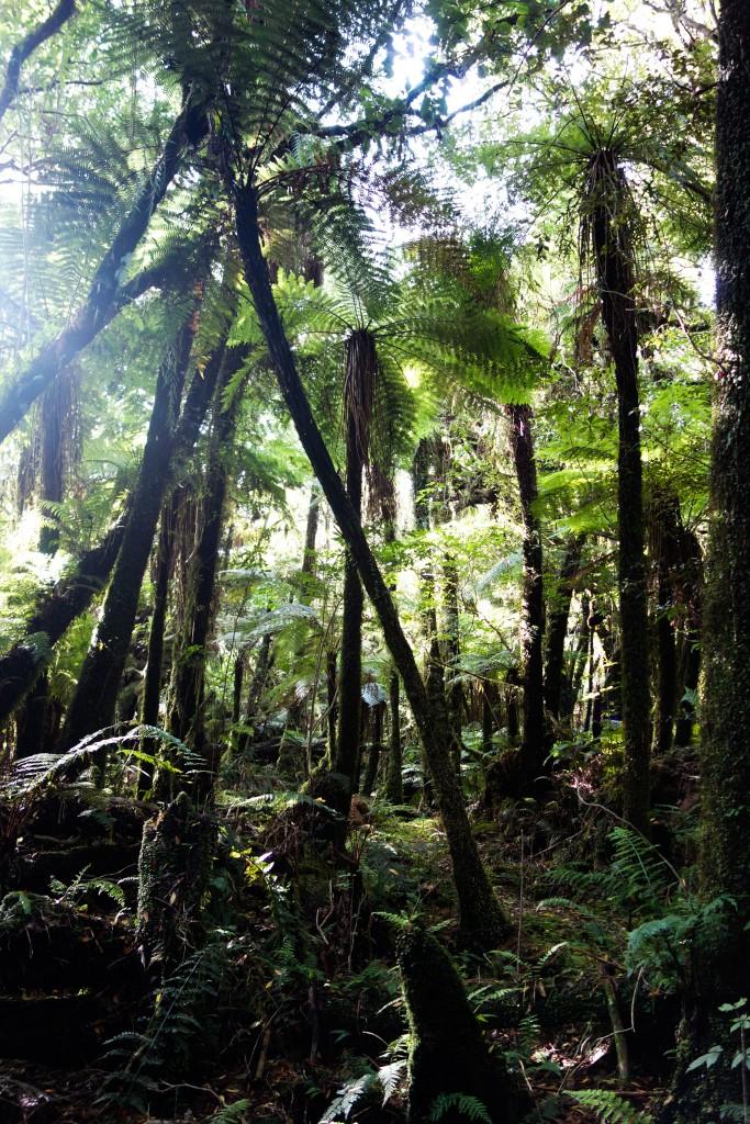 Glacier Fox, Nouvelle-Zélande, forêt tropicale