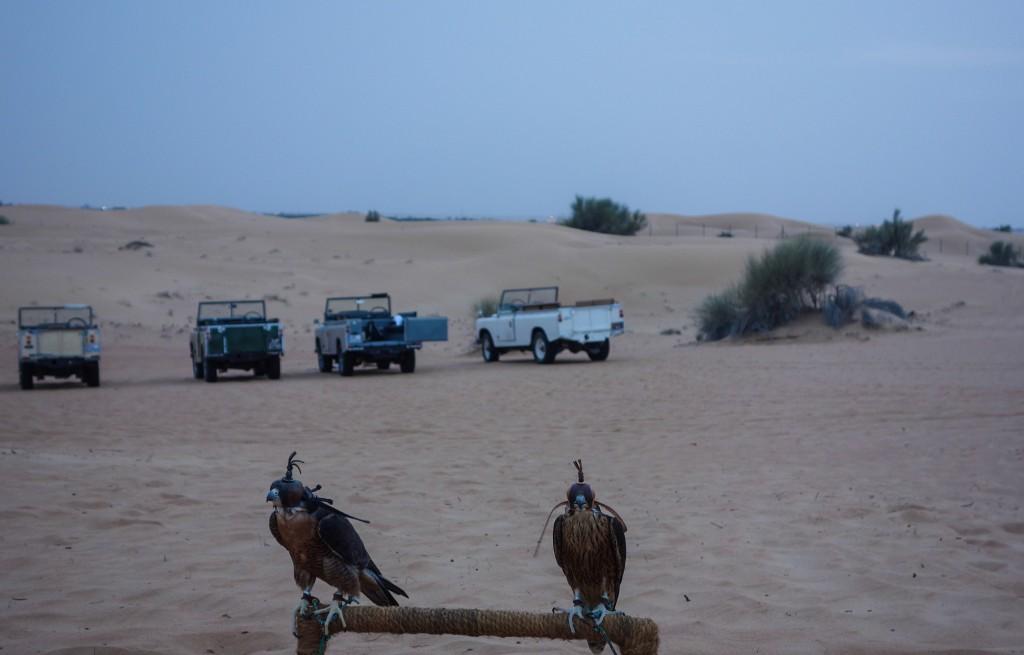 Faucon, Excursion dans le désert à Dubaï