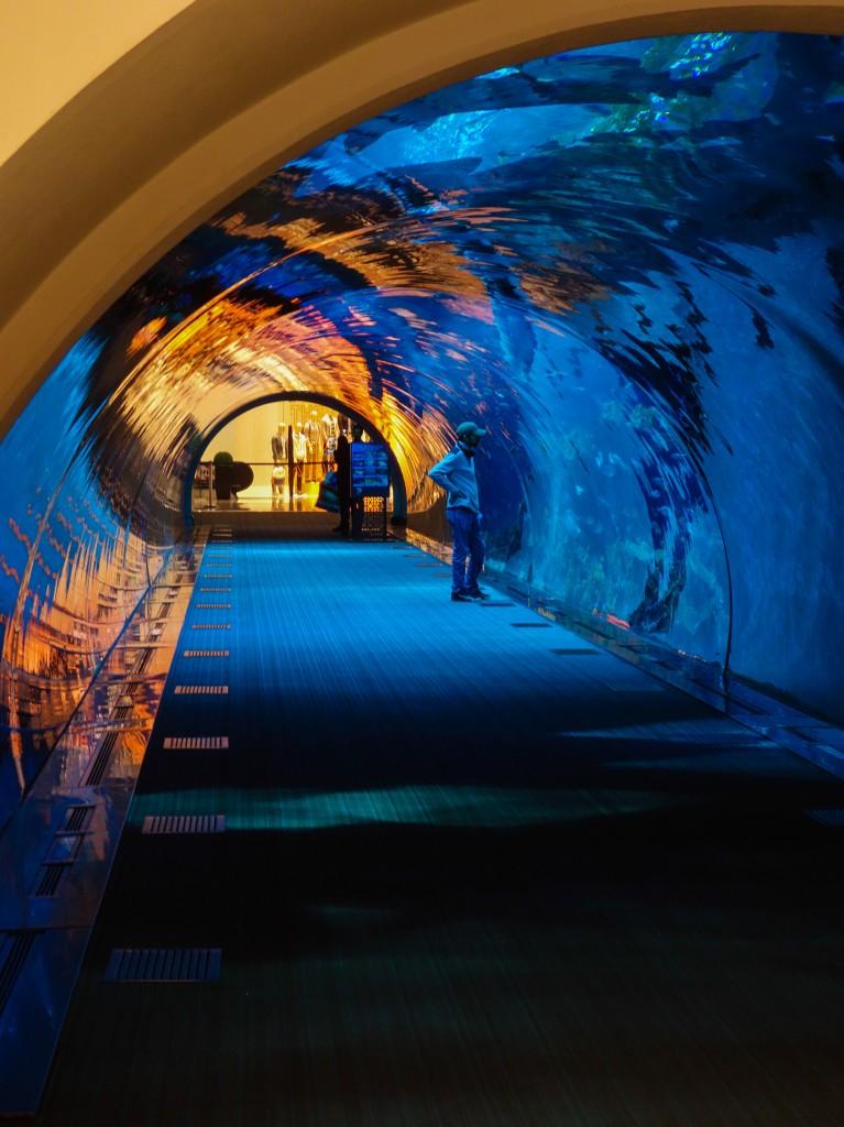 Aquarium dans le Dubai Mall, escale à Dubaï