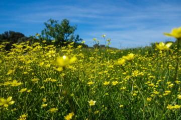 Voyage corse hors-saison au printemps, un régal pour les sens