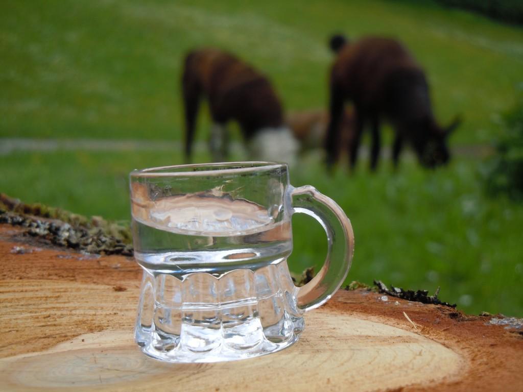 Schnaps autrichien et lamas - rando-lama en Autriche