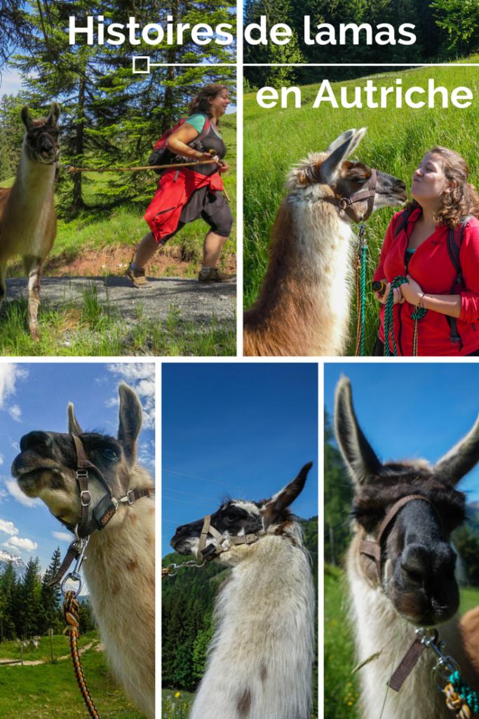Histoires de lamas en Autriche - une randonnée lama au coeur du Tyrol autrichien