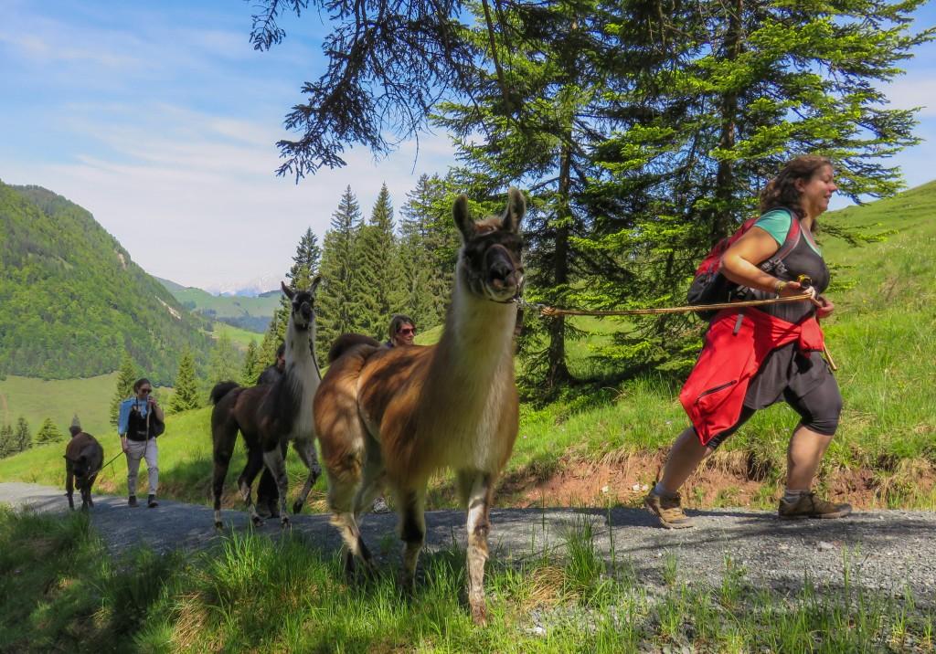 Jogging avec un lama - une rando-lama au Tyrol en Autriche
