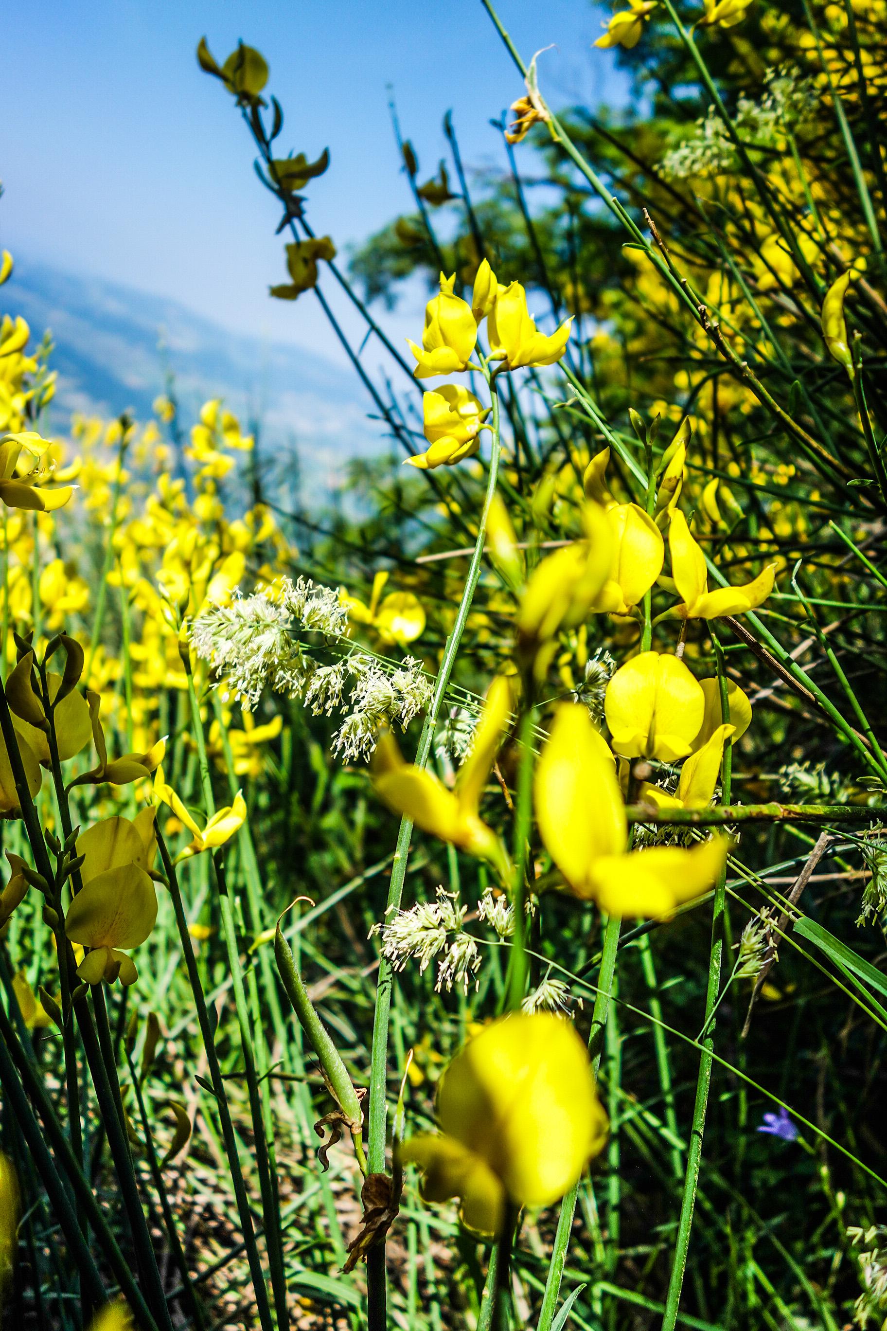 Randonnée en Italie: instants champêtres dans les Apennins