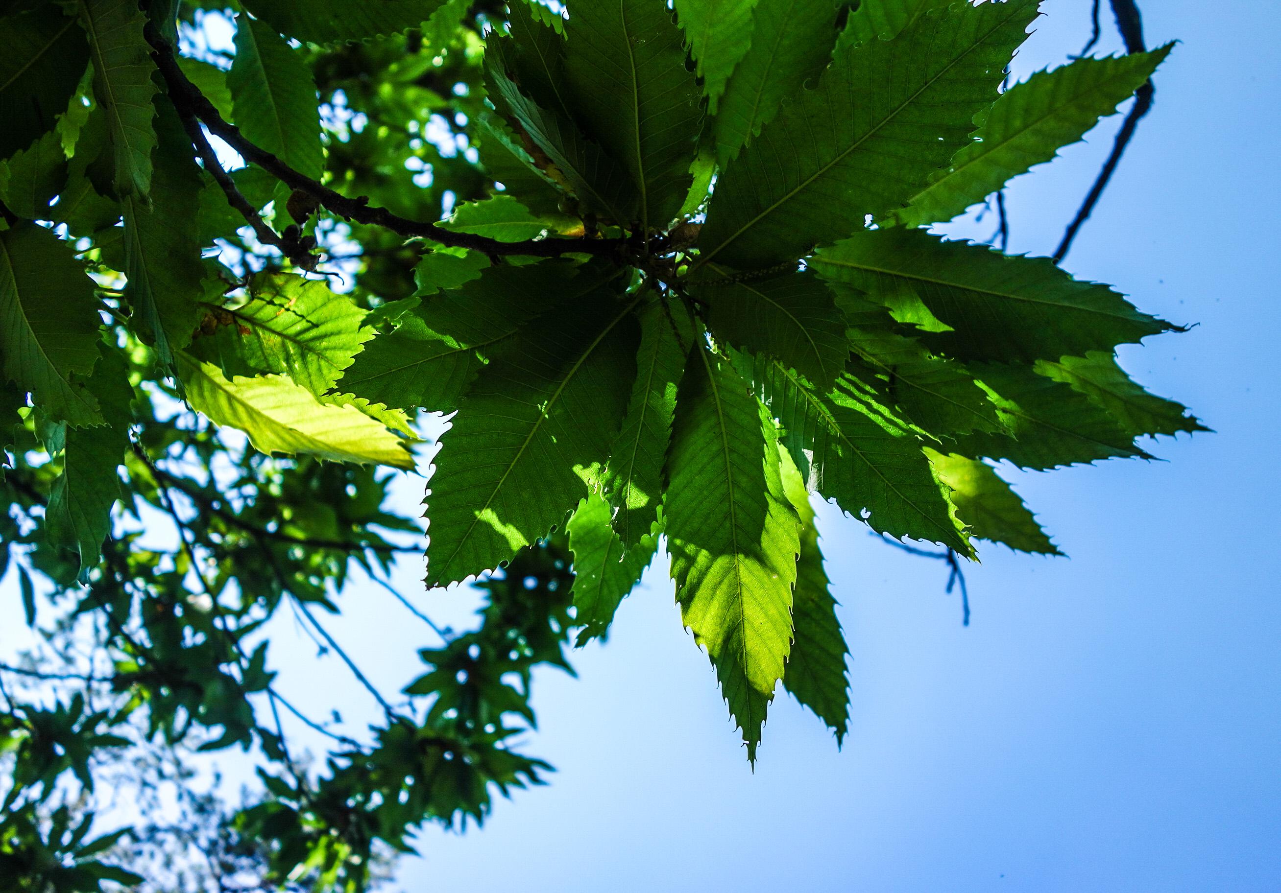 Randonnée en Italie: instants champêtres dans les Appenins