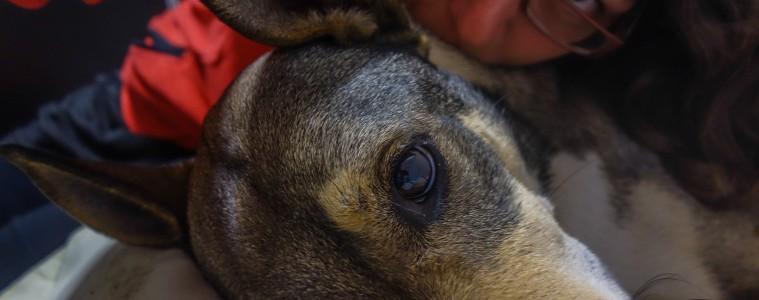Gardiennage de chiens à Buenos Aires