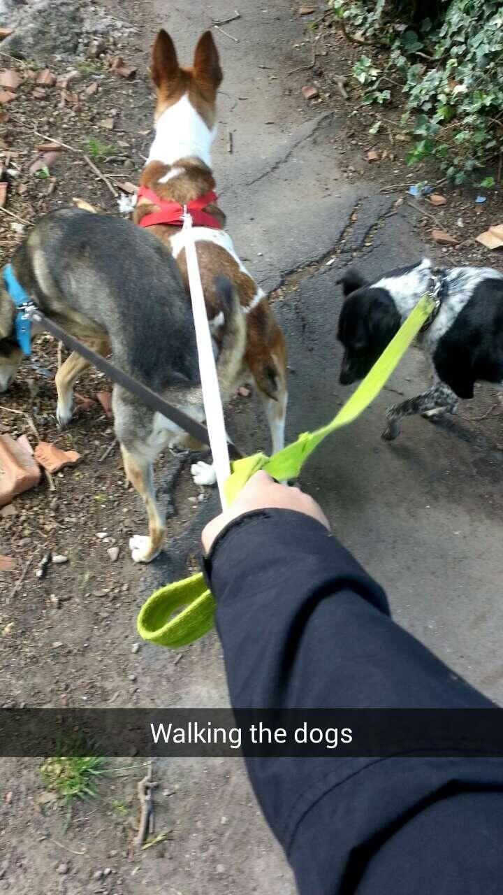 Promenade avec les chiens à Buenos Aires