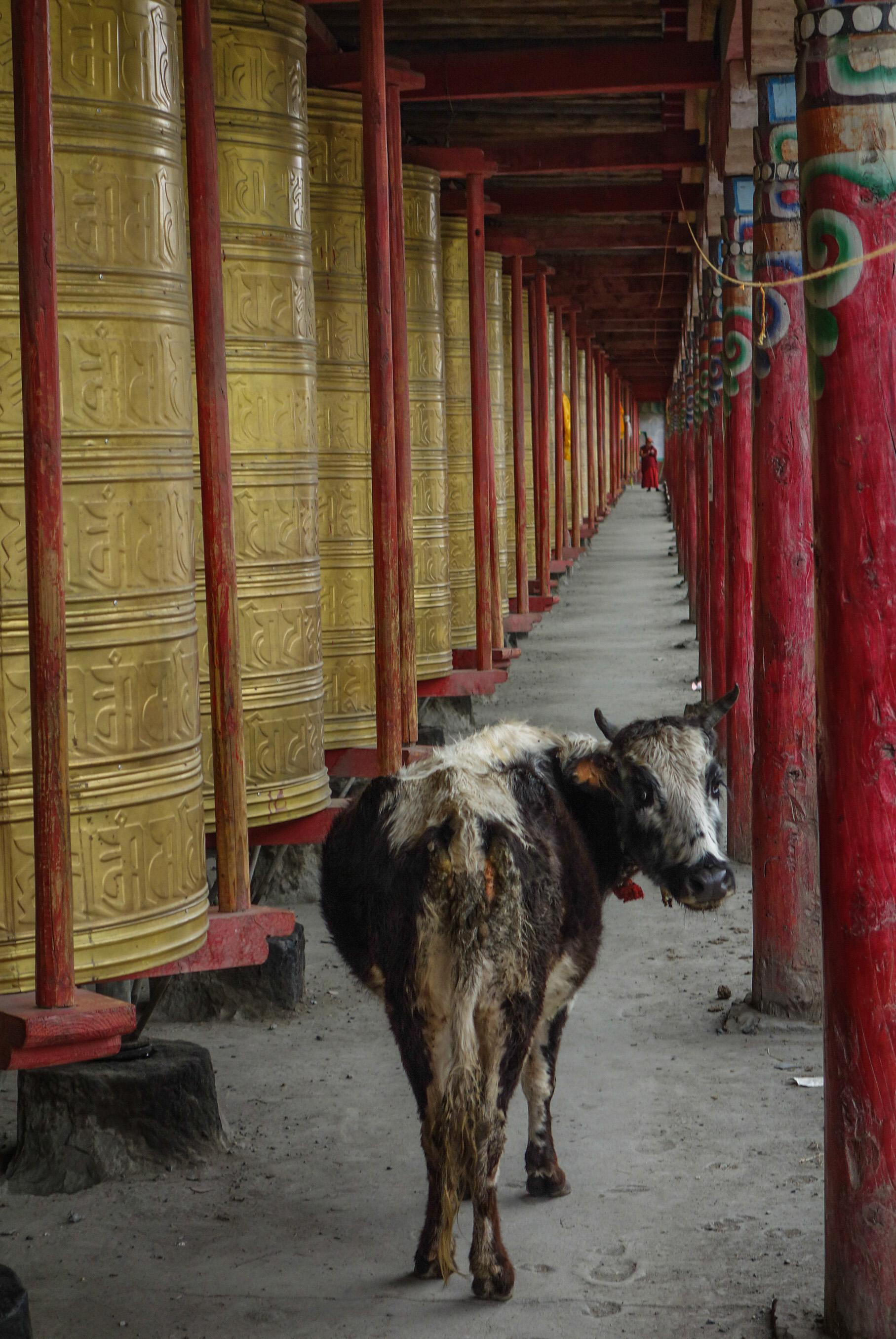 Tagong en Chine tibétaine