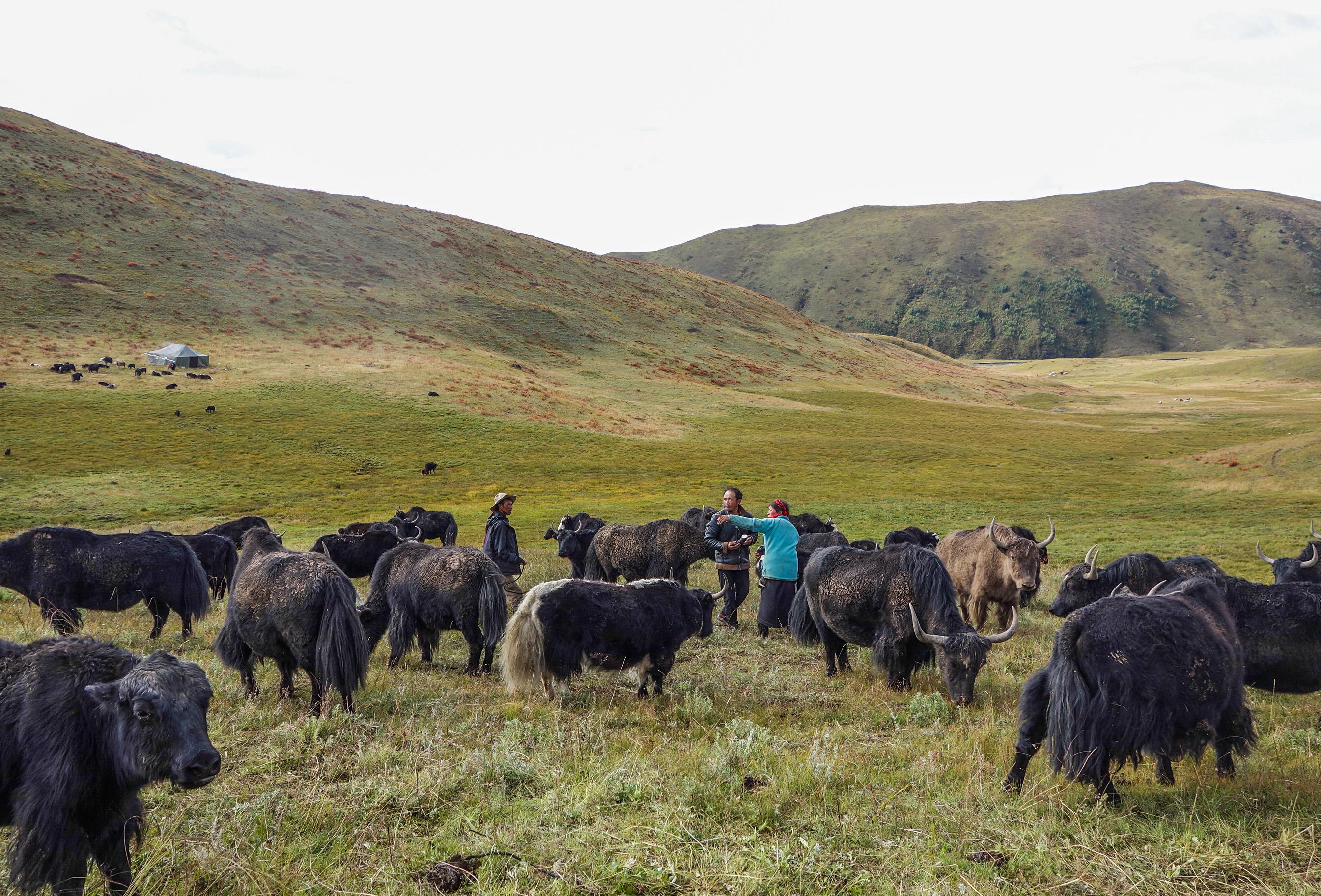 Famille nomade en Chine Tibétaine