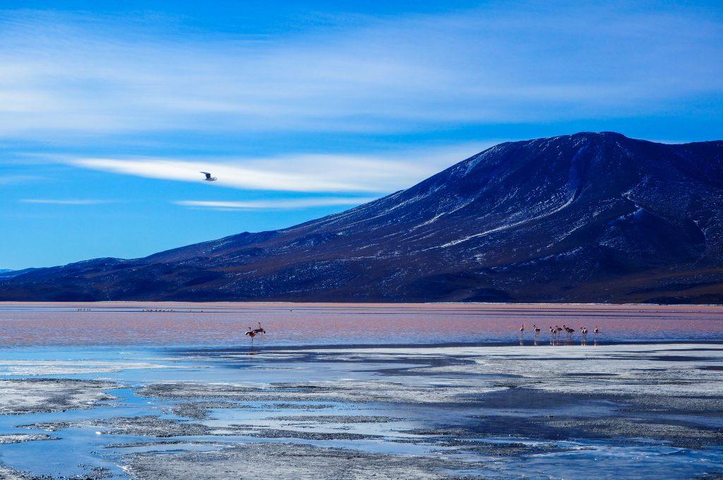 Visiter le Sud Lipez: Laguna Colarada