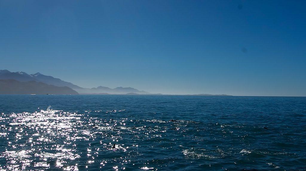 Nager avec des dauphins sauvages en Nouvelle-Zélande