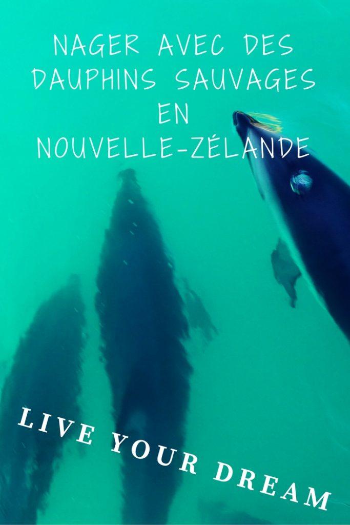 Nager avec des dauphins sauvages en Nouvelle-Zélande à Kaikoura: réaliser un rêve par Voyages et Vagabondages