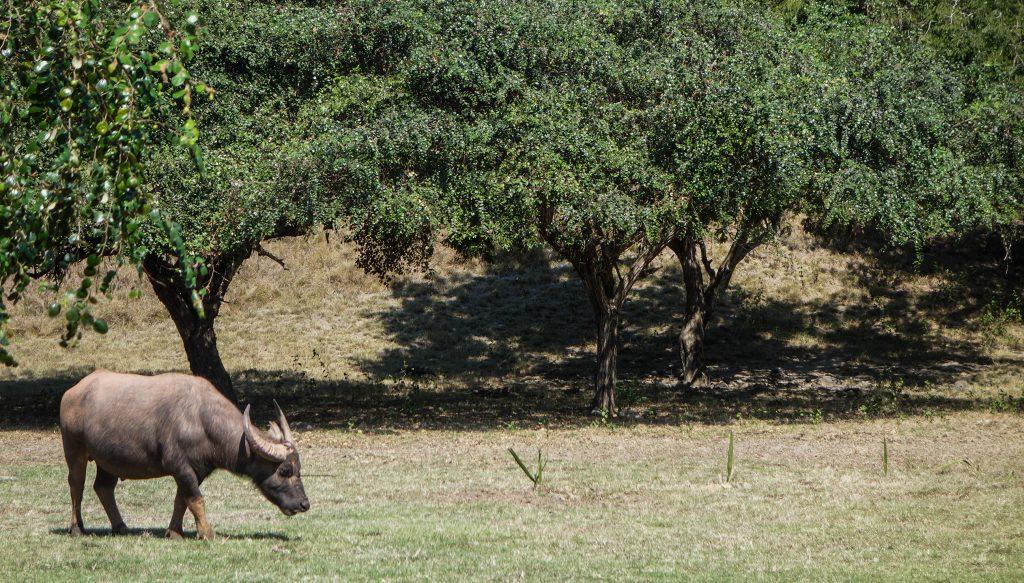 L'île de Rinca, dans le parc national de Komodo