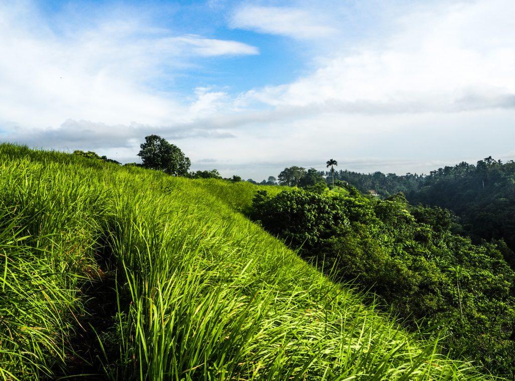 Voyager à Bali en quête de beauté et d'authenticité