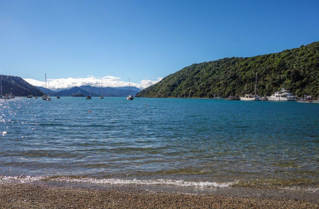 Mon premier trek en Nouvelle-Zélande: 4 jours sur le Queen Charlotte Track, une boucle depuis Picton