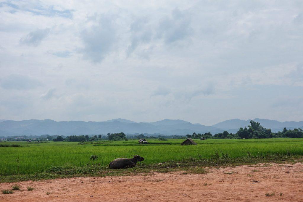 Rizière à Luang Namtha au Laos - Passage de la frontière terrestre de la Chine au Laos, entre Xishuangbanna et Luang Namtha - Récit et retour d'expérience. Tour du monde - Bienvenue au Laos