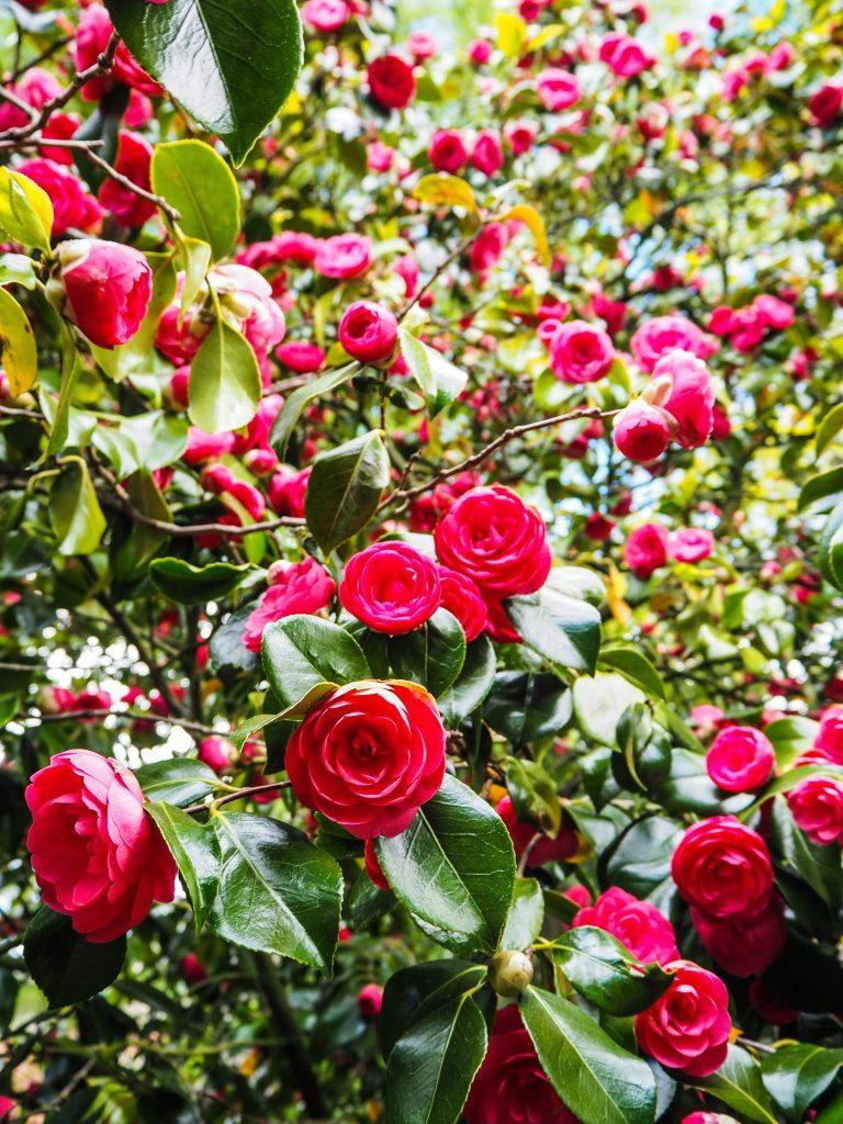 Jardin botanique à Belfast- Un week-end à Belfast: conseils pratiques et bonnes adresses pour un week-end réussi de quelques jours en Irlande du Nord