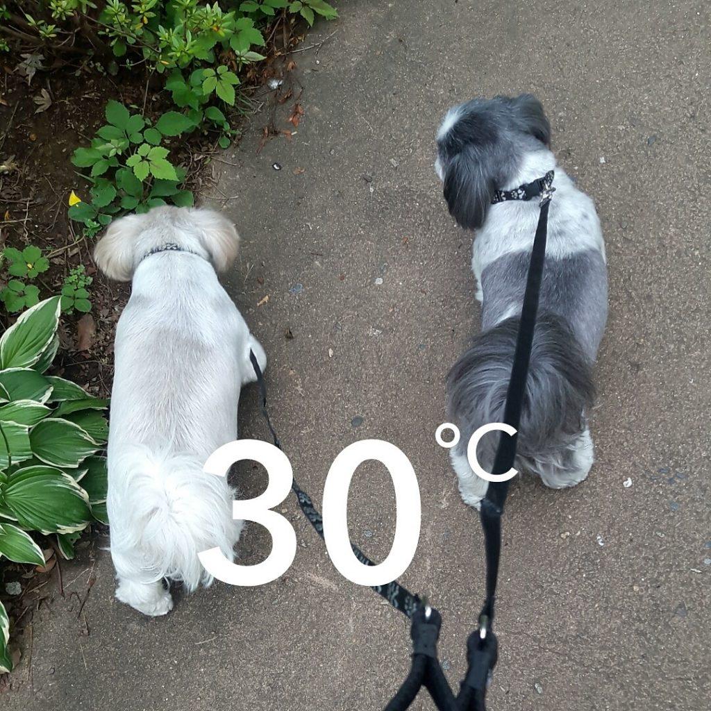 En promenade avec les chiens à Tokyo