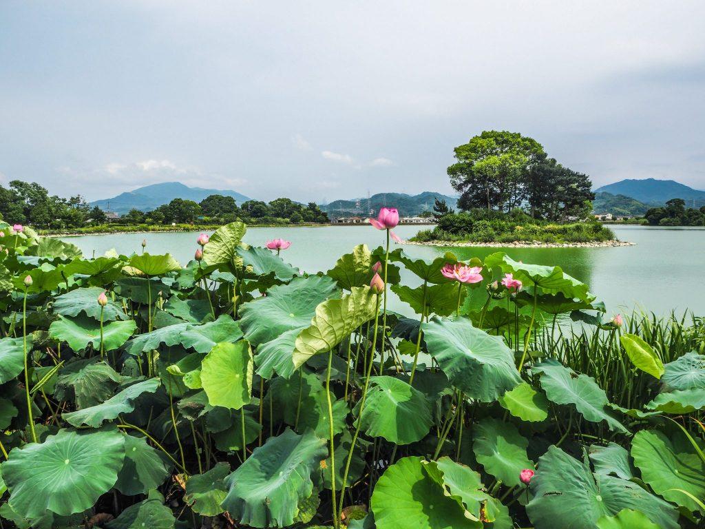 La campagne dans la ville de Wakayama lors d'un voyage authentique au Japon en mode slow travel