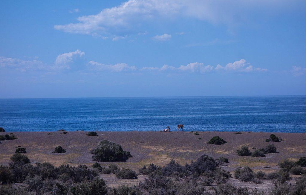 Péninsule Valdés à Puerto Madryn - Patagonie hors des sentiers battus - Patagonie argentine maritime