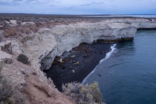 Colonie de phoques à Puerto Madryn - Patagonie hors des sentiers battus - Patagonie argentine maritime
