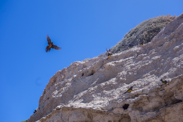 Les perroquets de Las Grutas - Patagonie hors des sentiers battus - Patagonie argentine maritime