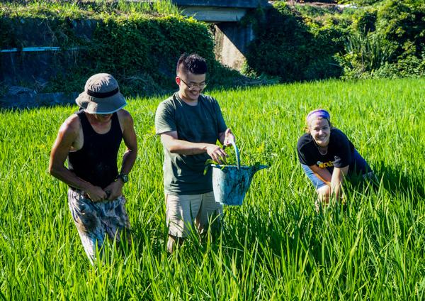 Travail dans les risières à Izu - Découverte de l'autre Japon sur la Péninsule d'Izu au Japon