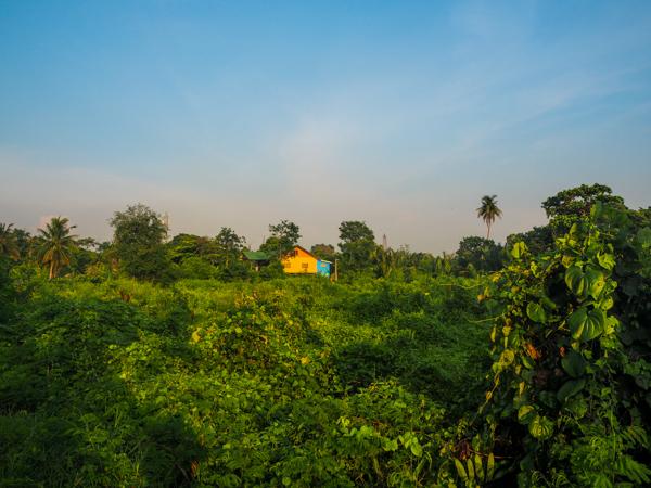 Quartier de Bang Kachao, le poumon vert de Bangkok - Où dormir à Bangkok - Visiter Bangkok: le guide pratique complet pour un premier voyage en Thaïlande et à Bangkok