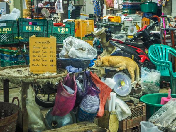 Chat et marchés à Bangkok - Visiter Bangkok: le guide pratique complet pour un premier voyage en Thaïlande et à Bangkok