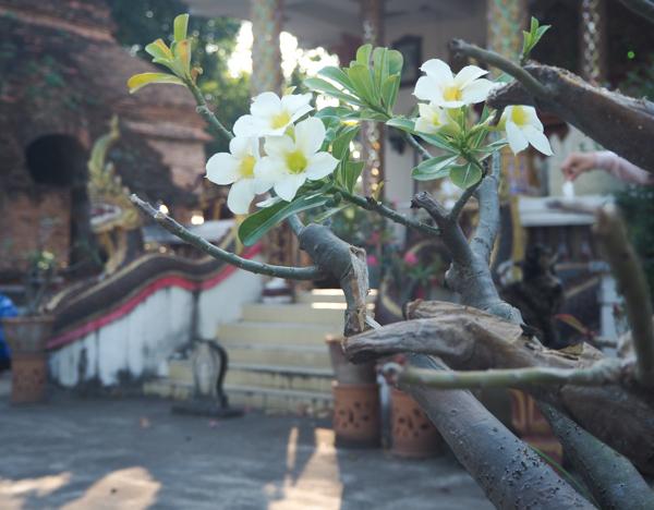 Visiter Chiang Mai : le guide pratique ultime du voyage lent et nomade à Chiang Mai en Thaïlande