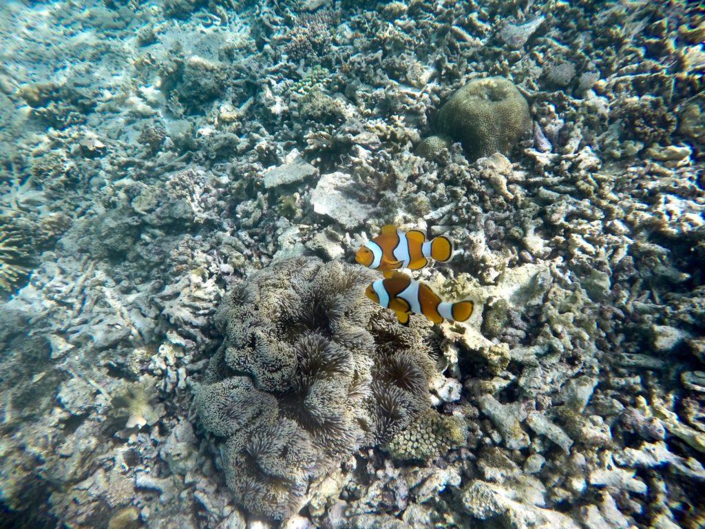 Fond marin en snorkeling à Tumbak en Indonésie - Lieux secrets et méconnus de l'Indonésie - Indonésie authentique et hors des sentiers battus