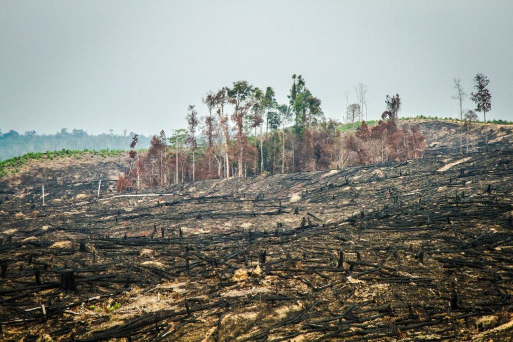 Déforestation pour l'huile de palme -Parc national du Tesso Nilo à Sumatra en Indonésie - Lieux secrets et méconnus de l'Indonésie - Indonésie authentique et hors des sentiers battus