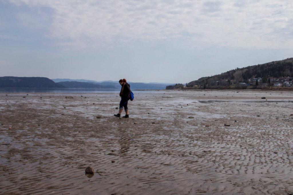Excursion à marée basse avec le Musée du Fjord dans La Baie des Ha! Ha! - Visiter la région du Saguenay Lac Saint-Jean