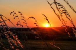 Quelques idées de week-end insolite, nature et déconnexion en Berry pour se ressourcer lors d'un voyage en France: hébergements insolites, activités uniques et détente, moments de nature et de déconnexion pour se retrouver et revenir à l'essentiel.