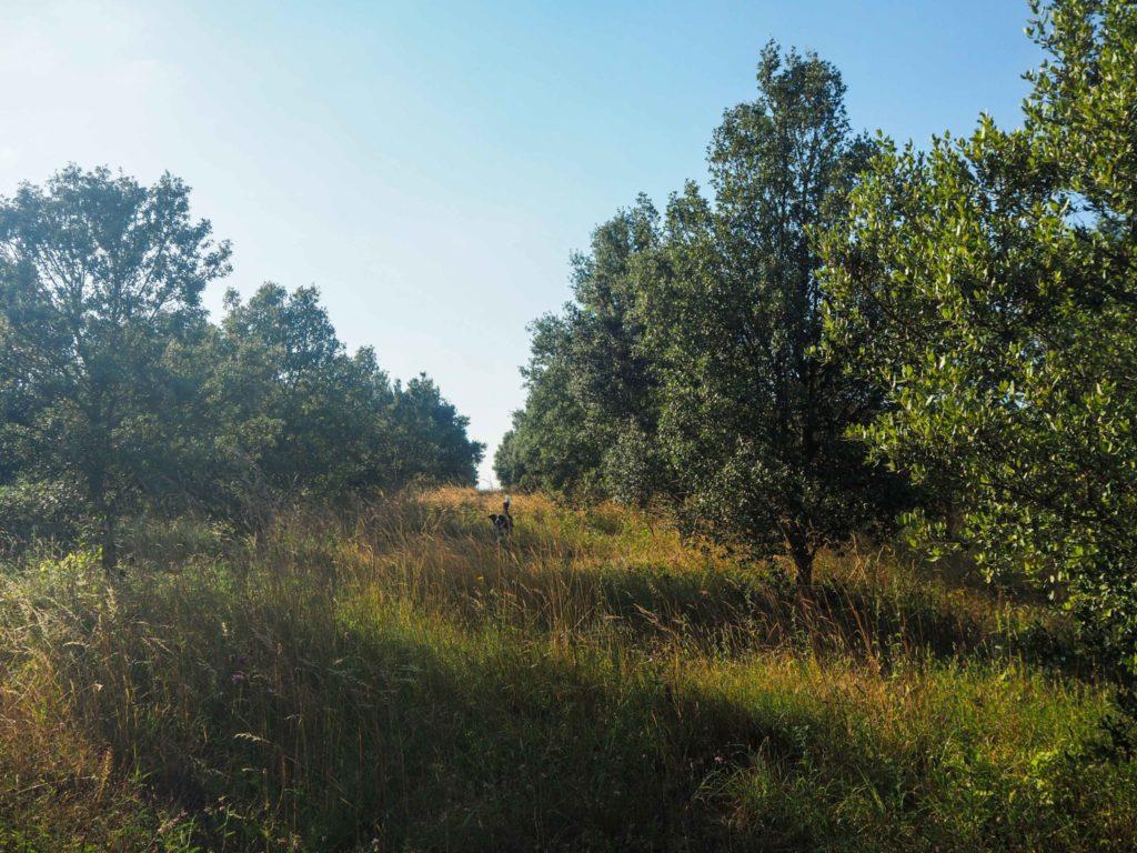 Séjour au domaine trufficole La Fontenille - Quelques idées de week-end insolite, nature et déconnexion en Berry pour se ressourcer lors d'un voyage en France: hébergements insolites, activités uniques et détente, moments de nature et de déconnexion pour se retrouver et revenir à l'essentiel.