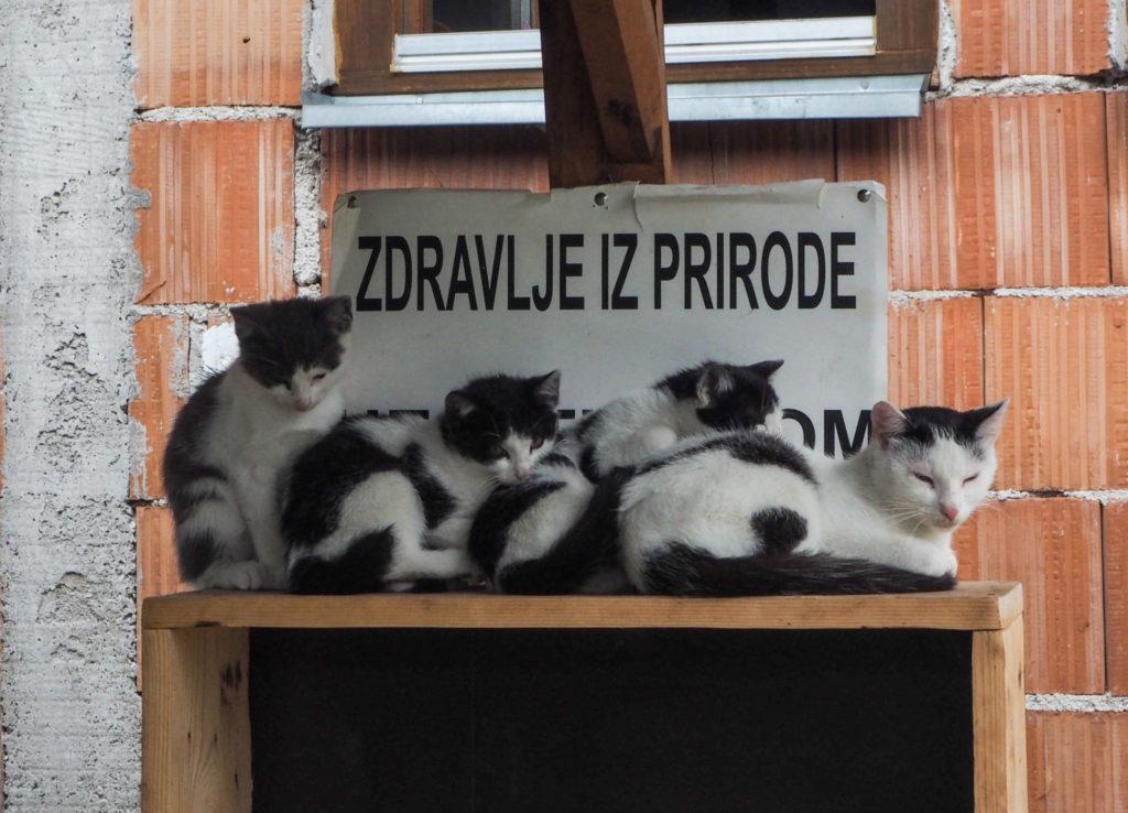Quelques chats à Jajce en Bosnie-Herzégovine