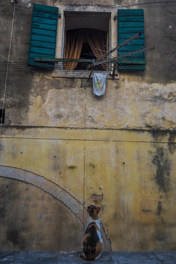 Chat à Kotor au Monténégro